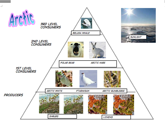 external image Torrie-Pyramid.png